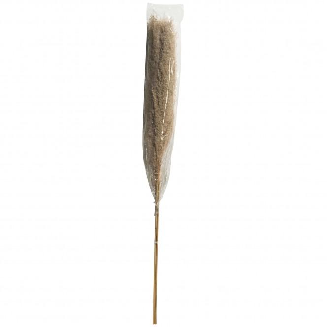 Pampasgrasbuendel3er-Trockenblume-213871-Braun-Natur-100cm-pla2