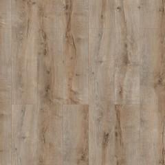 Lozano oak